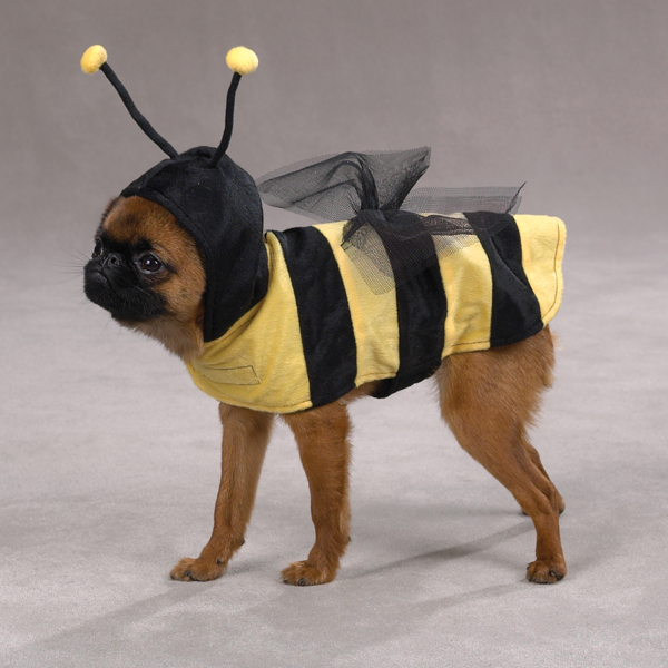 Casual Canine Honey Bee Costume