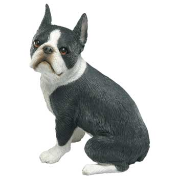 Head Turned Boston Terrier Figurine MS533