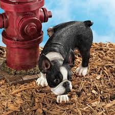 Naughty Boston Terrier Dog Figurine