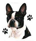 Boston Terrier with Pawprints Tote