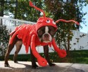 Boston in Lobster Costume